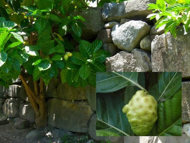 UaPouHakahau-9