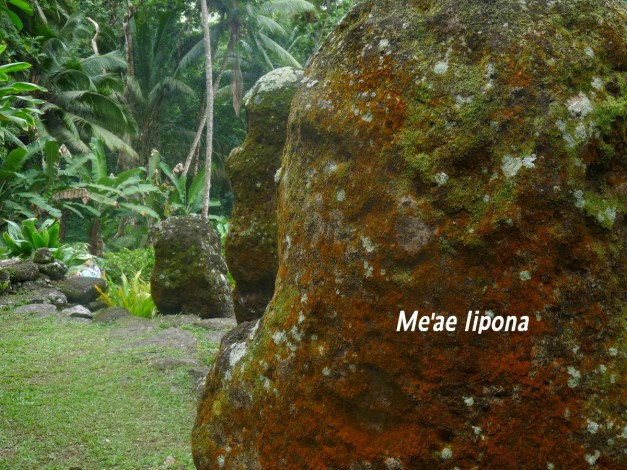 meae-iimpona-1