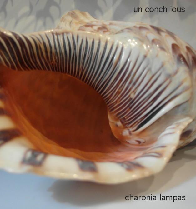 UnconchiosCharoniaLampas-10a