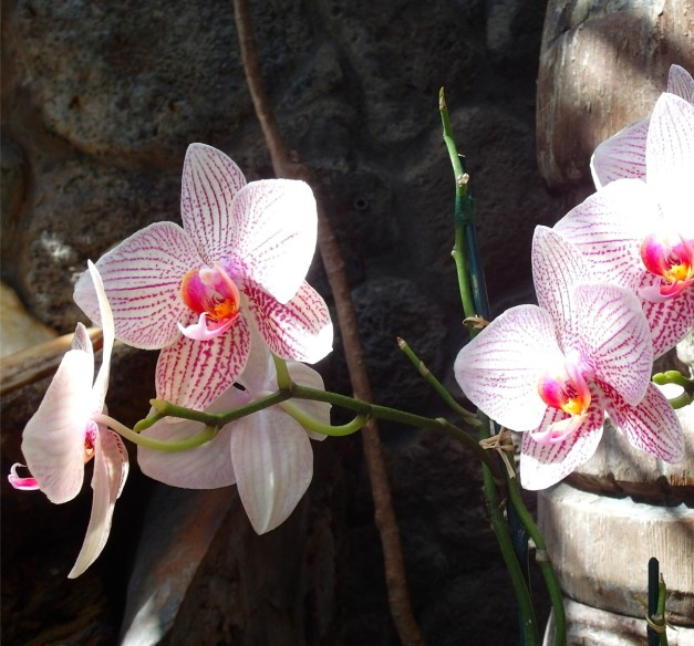 OrchidsOf-1