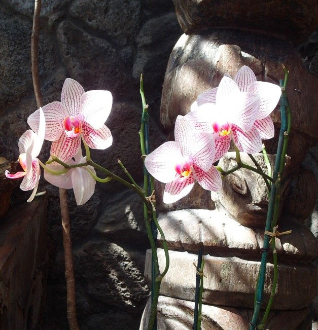 OrchidsOf-2