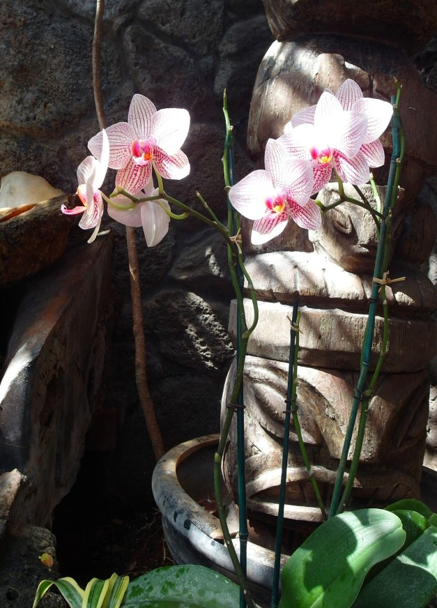 OrchidsOf-3