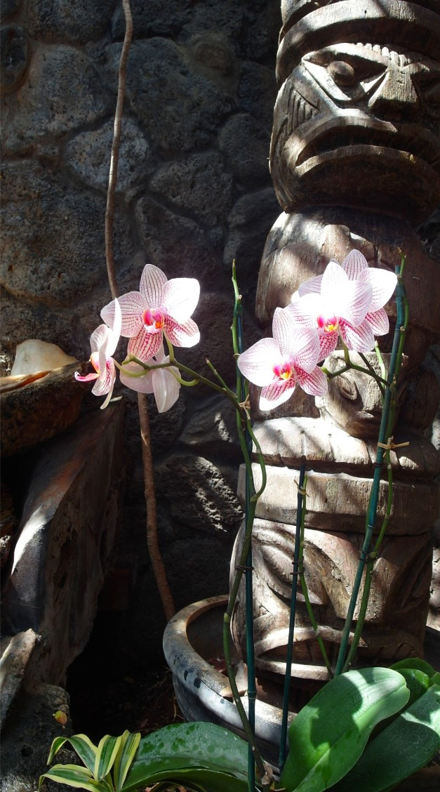 OrchidsOf-4